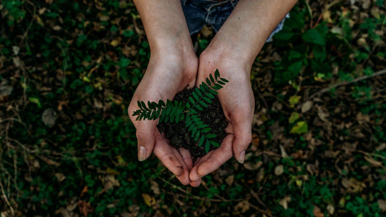 grøn plante vokser i hænder
